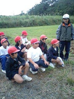 奄美大島市節田小学校  サトウキビ収穫